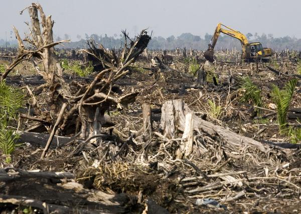 Skog avverkas i Indonesien för att ge plats åt produktion av palmolja.