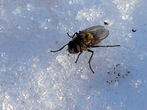 Ett vårtecken. Insekterna börjar komma fram. FOTO: LÄSARBILD/ELLINOR RÖNNHOLM