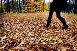 lövtäcke. På många ställen är nu marken täckt med färggranna löv. Med det är viktigt att få bort dem från gånggator.