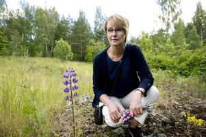 Annika Johansson är glad att lupinerna inte har hunnit sprida sig i någon större omfattning.