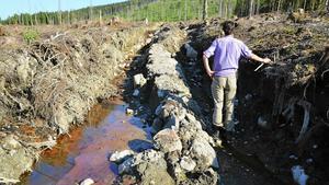 Holmen Skogs brutala kalhygge med makabra körskador utan hänsyn, där lagrat giftigt metylkvicksilver riskerar läcka ut.