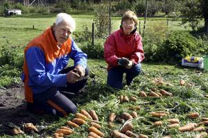 Lättade odlare. Göran Nilsson och Gun Simonsson, som brukar fyra av kolonilotterna i Laxå, har varit oroliga över om kolonilotterna får vara kvar nu när det byggs en omlastningsterminal. Igår beslutade Sveaskog och T-schakt att kolonilotterna inte kommer att tas bort under nästa år.