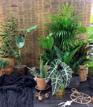 Gröna växter i klunga med olika bladformer ger en häftig kontrast.