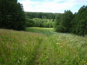 Det är stora skiftningar i naturen i naturreservatet Säterdalen, på sina håll branta ravinkanter, på sina håll bredare ravinbotten där ån rinner fram och där åkrar sträcker sig nästan ner till ån. Foto:Roland Berg