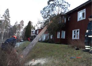 Brandkåren jobbar med att såga ned trädet som föll över ett bostadshus i Hånåkni i och med stormen Dagmar.