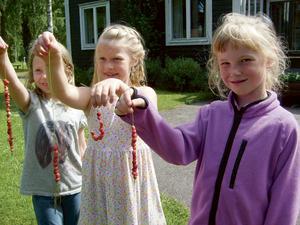 Smultron på strå plockade av från vänster: Nora, Ella och Linnea. Bild: Privat.