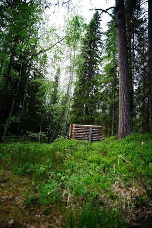 Utöver Rörströmsälvens fiske och vildmarksupplevelser ordnar Bergtjärnens viltskådning samt Sunnansjögården jakt och fiske också viltskådning.
