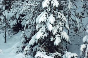 Kommer det att bli någon snö till jul?