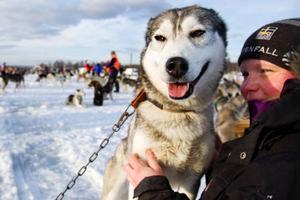 Marie Christensson är en av Torbjörn Öhrströms medhjälpare. Hon lugnar hundar i väntan på att starten ska gå.