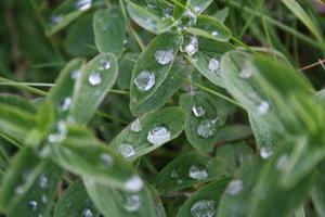 Vatten droppar såg ut som salt i kameran när jag tog bilden. Det var roligt att lägga sig i gräset för att göra sådana bilder.