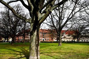 Karl Johans park