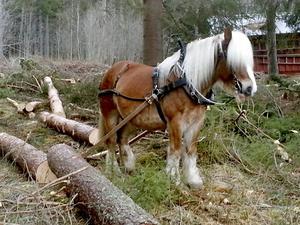 Skogsarbete.