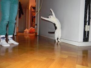 Den här bilden tog jag mitt i vintern, det blev en test bild på hur min nya kamera fungerade i olika lägen. PÅ denna bild ser det ut som min katt Kitty står och sjunger. Väldigt härlig bild eller vad ska man säga!