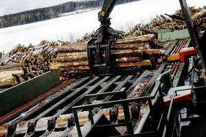 Setra sågverk i Skinnskatteberg. Timret lyfts in till mät- och röntgenanläggningen som sorterar stockarna efter kvalitet.
