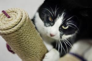 Linda opererades efter en ögoninflammation. Nu har hon fått ett nytt hem.