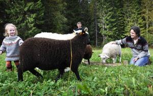Sara och Tomas Lindström, här med dottern Ronja, har en liten får- och lammproduktion vid sin gård i Borglunda. De har valt att halalslakta sina djur vid slakteriet Rafnaslakt i Ramsele.