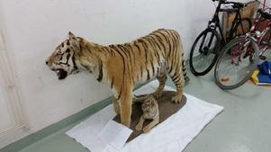 Försäljningen av de två tigrarna har lett till ett unikt rättsfall.