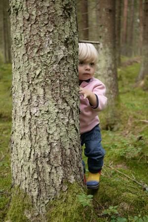 Lilla Elsa 2 år leker tittut med sina föräldrar Mikael och Jessika Roos.Insänt av gammelfarmor