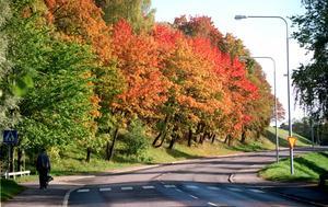 Tivolivägen hösten 1998.