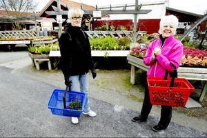 Maarit Jämtsäter och svägerskan Kerstin Jämtsäter vill inte framhålla sig som några med koll på trender, trots att de matchat penséerna i samma färg som kundkorgen. Trädgårdsliv tycker de hursomhelst mycket om.