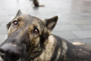 En hundförare går alltid med samma hund.