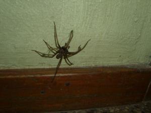 Satt en stor spindel i Trappen där jag bor