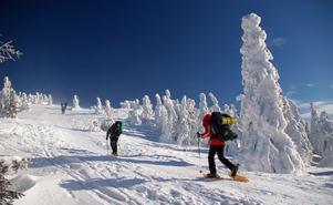 Kan man inte gå i snön eller ta sig fram på skidor är snöskor ett utmärkt alternativ. I februari ska ett hundratal naturentusiaster vandra på sådana i Skuleskogens nationalpark.