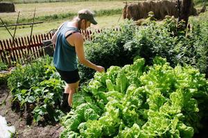 I sallads- och mangoldslandet. Mycket ätbart odlas på gården.