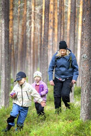 Arvid och Lina Forsberg springer fram bland tallar och stenblock i Jansjöskogarna, och färdledaren Viktoria Trewe har fullt upp med att hänga med.
