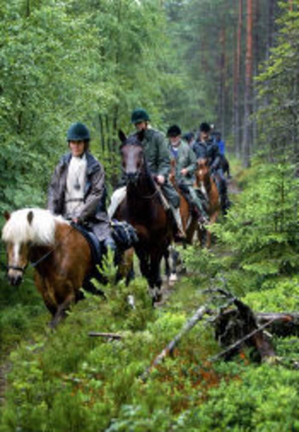 Rakt in i storskogens friska och mäktiga sommargrönska, för nu är rid- och vandringsleden Gustur invigd.