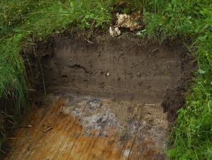 Kolrester. Arkeologerna från Dalarnas museum hittade kolrester i marken redan i de första groparna. Det kan röra sig om kol från järnframställningen som bedrevs vid platsen på vikingatiden, år 890-980, eller bara växter som brunnit. Foto:Dan Havemose