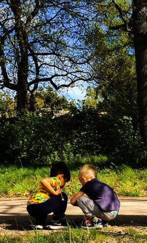 En solig fredag besökte vi Åsby minizoo. På bilden har Rio och Edvin tröttnat på djuren och letar småsten vid vägkanten.