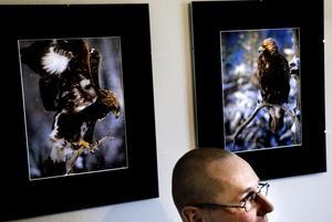 Örnkoll. Koll på örnarna i Falutrakten har ornitologen och fotografen Hans Ersson från Sundborn, som på bilden visar två av sina favoritbilder på utställningen. Foto:Lars Dafgård