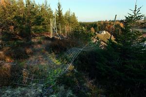På minst 50 ställen längs med E18 mellan Kapellskär och Rosenkälla är det hål i viltstängslet. Uppklippningen har, enligt Svevia i Södra Roslagen, pågått sedan i våras.