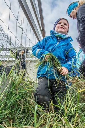 Erik Svingen slet med att få fram lite gräs åt getterna på Torsta.