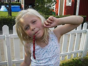 Barnbarnet Mirjam på besök hittade smultron på vår lilla tomt på Gryta!