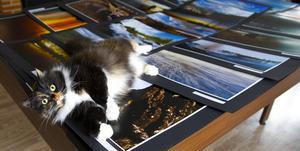 Bokhandelskatten Kakan är med och visar de många storslagna bilderna i nya fotoboken Vårt Härjedalen.