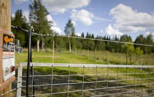 Här bor den norska kvinnan som har fått hundförbud i Norge. Hon har hägnat in sin tomt för att kunna ha hundar.