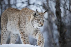 Vem bör ha rätt att överklaga jaktbeslut?