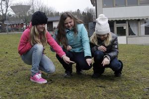 Plocka upp! Lisa Gunnarsson, t v, Denize Björkman och Alexia Hallberg visar hur klassen letade hundbajs.