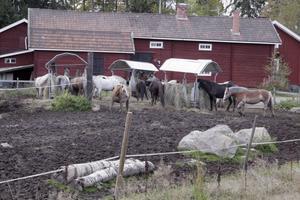 Många hästar finns på Järvsö ryttargård.