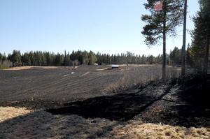 Räddningsledare Gunnar Nylander uppskattade den eldhärjade ytan i Dalåsen till cirka 60 000 kvadratmeter.