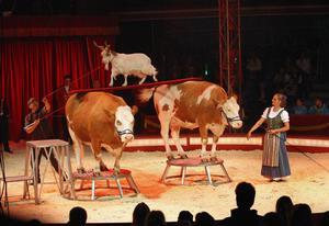 Husdjursnumret är en höjdare i årets Cirkus Maximum.