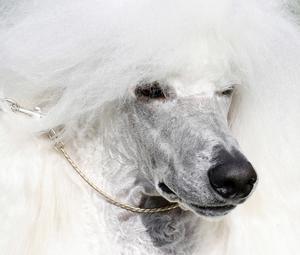 Hundägare är de djurägare som enligt undersökningen oftast ringer hem till sina djur under semestern.