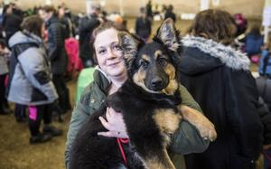 Johanna Nylander från Kvissleby tävlade i valpklassen 4–6 månader med chodský pes-hunden Bella Donna. Det är en ovanlig vallhund från Tjeckien, finns endast 36 stycken i Sverige.