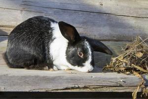 De fyra kaninerna på berget har flyttats till en mer central plats.