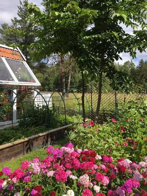 Praktfulla krydd- och blomsterbäddar närmast växthuset.