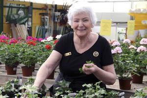 Det är växtvärk i växthuset. Det är bråttom och det är så mycket som ska ske på kort tid. Trädgården i Alfta ska verkligen blomma, säger Marianne Liljemark.