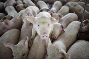 Okänt ursprung. Även när det inte kommer larmrapporter om gift i köttet är det viktigt att vi kan välja vad vi vill äta, skriver Åsa Westlund.foto: scanpix
