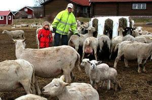 Full uppsikt. Riitta Laitinen och dottern Evelina vaktar fåren både dag och natt efter vargbesöket